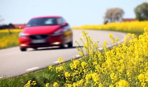 Autoasi-toivottaa-turvallista-kesaa-www